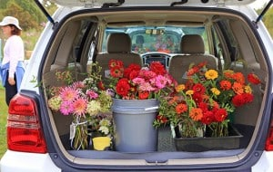 These gardeners on Cape Cod grew hundreds of cutting flowers in a community garden plot. Many are arranged in recycled glass vases and others are delivered to local nursing homes for their activity time. Once a week the gardeners gather to cut and arrange their Giveaway Bouquets. By mid-October they'd delivered over 1,000 arrangements. That's over 1,000 smiles and spirits lifted. You can grow that too!
